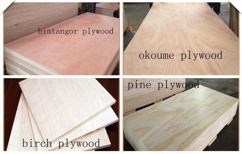 Bintangor Okoume Birch Pine Face Plywood